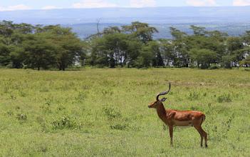 Photo: Keniassa oli taas impaloitakin