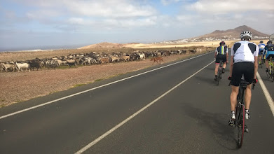 Photo: Sheeps crossing the road.