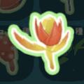 火炎放射花の種