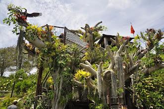 Photo: San Diego Botanical Gardens - Treehouse
