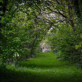 Eerie walk in the woods by Craig Payne - Landscapes Prairies, Meadows & Fields ( eerie, wild, grass, trees, flowers )