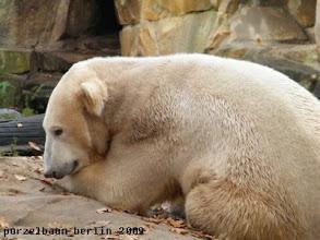 Photo: Knut braucht auch einmal einen ruhigen Tag ;-)
