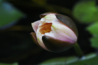 Photo: reminds me of Audrey Jr... :) feed me Seymour....  and goodnight #flowerphotography  #macro