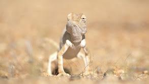 Namib Desert thumbnail