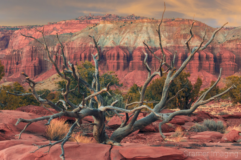 Cramer Imaging's professional quality landscape photograph of a tree against the red cliffs of Capitol Reef National Park Utah