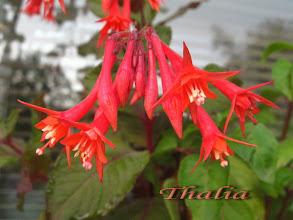 Photo: Thalia