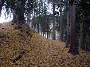 銀杏の落ち葉の上を歩く