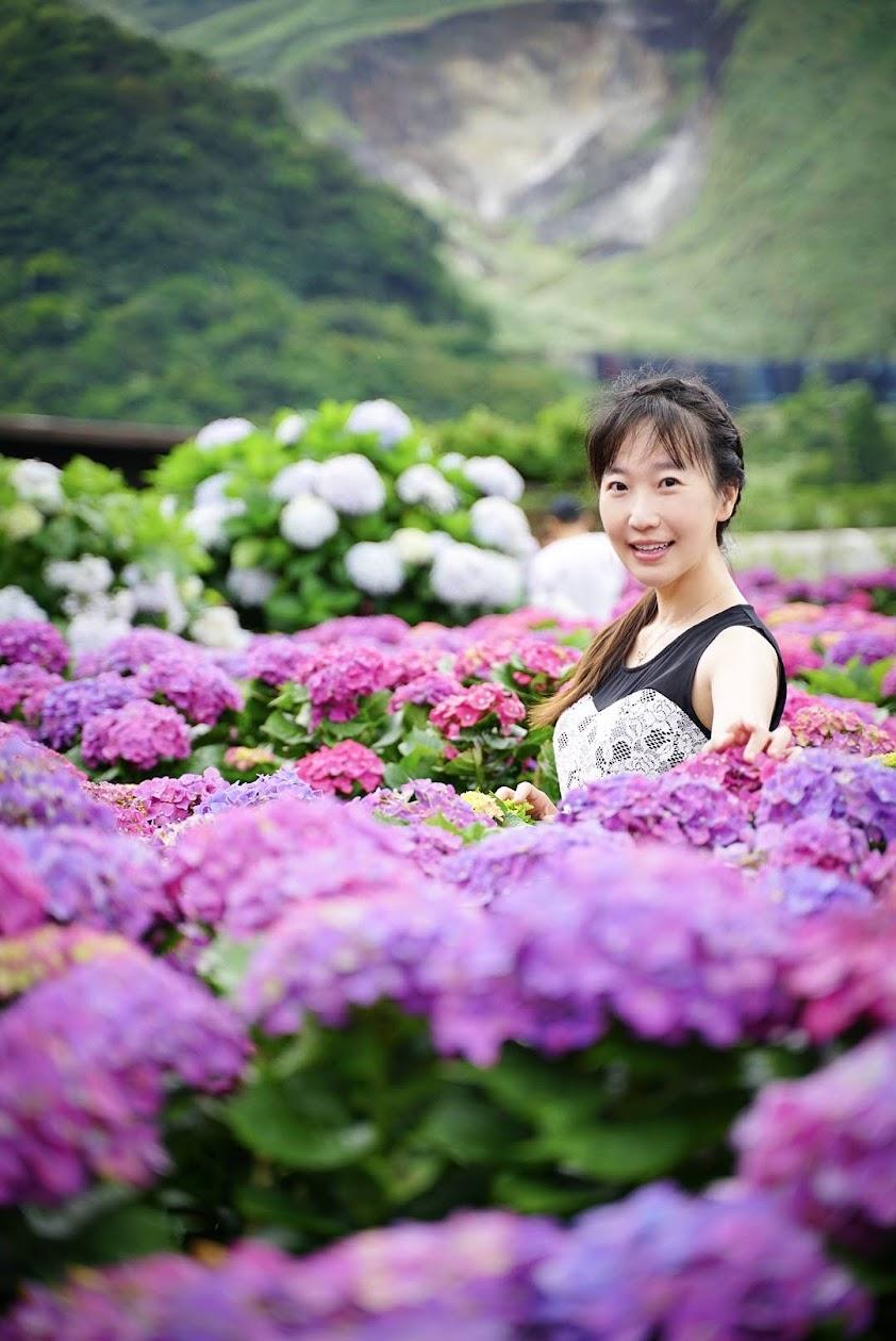 蘿絲紫陽花照-金山溫泉會館推薦