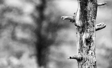 Photo: For #TreeTuesday curated by +Christina Lawrie.