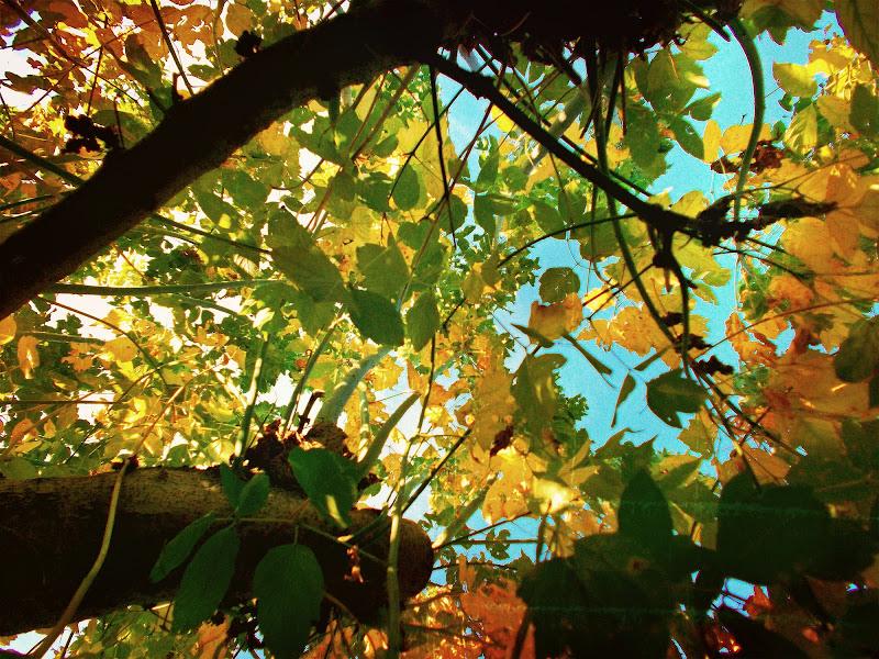 秋 di martapdn