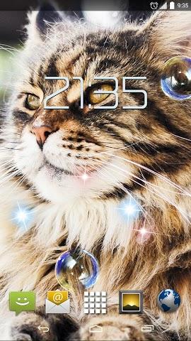 android Cute Cats HD Live Wallpaper Screenshot 2