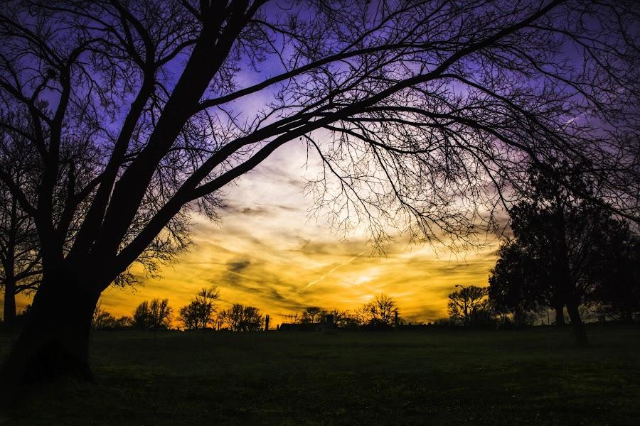 Park sunset 1 of many :) by Dan Miller - Novices Only Landscapes (  )