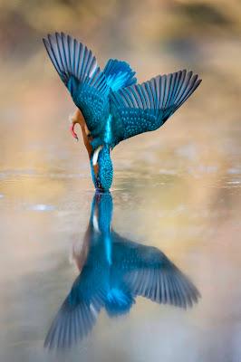 double blu.... di Rickytre