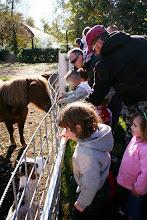 Photo: Stellina, il pony più adorato dai bambini