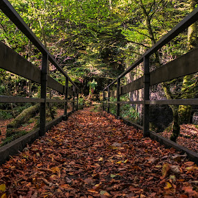 The Leafy Bridge by Cornish Nige  - Landscapes Forests ( leaves, autumn, bridge, trees, water,  )