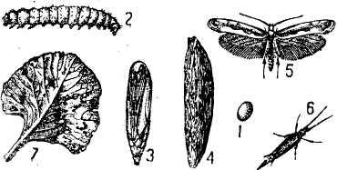 http://sbiblio.com/pictures/agriculture/Image195.jpg