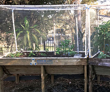 PVC pipe and connectors frame from Klever Cages protecting a raised bed vege garden