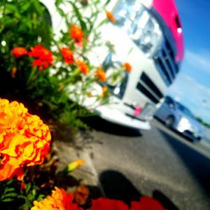 ハイエースバン TRH200Vのカスタム事例画像 シュナ 🐾🐶🐾CT2期生さんの2020年08月20日05:40の投稿