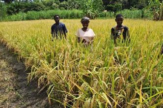 Photo: KPL demoplot in Mngeta village, Ifakara North, Morogoro, Tanzania with farmers [Photo by Erika Styger, 2012 ].