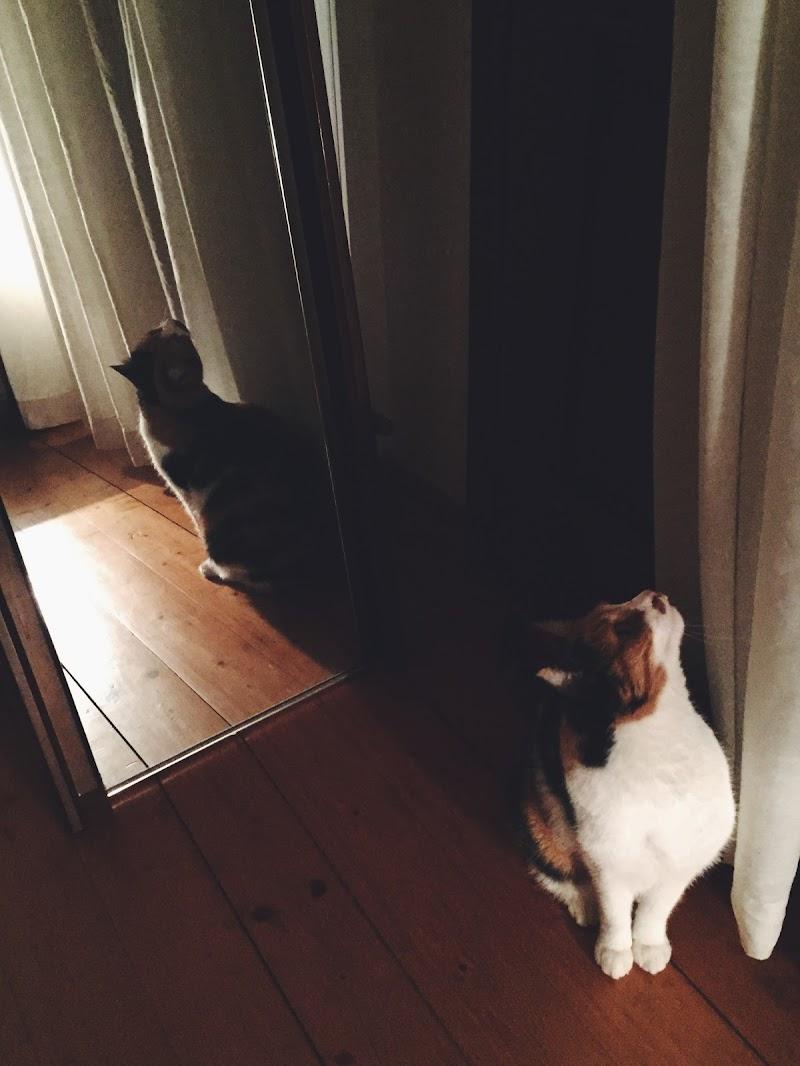 Gioco di specchi di mara_berton