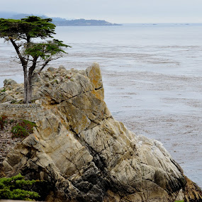 The Lone Cypress by Maithili Saoji - Nature Up Close Flowers - 2011-2013