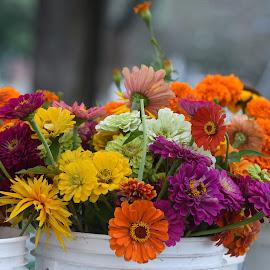 Flowers in Buckets  by Lorraine D.  Heaney - Flowers Flower Arangements