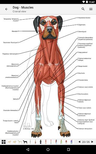 玩免費醫療APP|下載vet-Anatomy app不用錢|硬是要APP