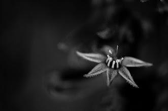 Photo: sweet dreams kind folk...  #flowers  #flowerphotography  #bwphotography  #blackandwhitephotography +Monochrome Arty Club #macromonday +Macro Monday curated by +Kerry Murphy+Kelli Seeger Kim+Jennifer Eden