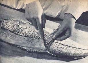 Photo: A hal bőrének lefejtése. - Zdejmowanie skóry z ryby.