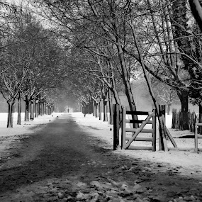 Pathway in the snow by Stephen McKibbin - Landscapes Forests ( pathway, gateway, snow, trees, forest )