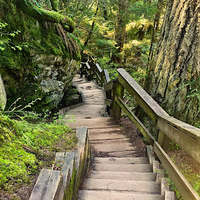 Zen Moment by Charline Ratcliff - City,  Street & Park  City Parks ( peaceful, stairs, nature, canada, lynn canyon park, green, moss, trees, vancouver,  )
