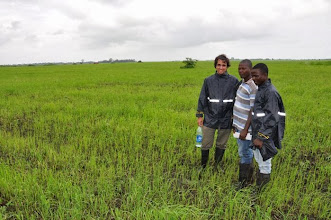 Photo: WARC team in one of their rice fields, planted with conventional methods (broadcasting seeds) Emiliano Mroue, CEO of WARC, Daniel Saidu (chief agronomist) and staff in Tormabum, Bo District, SW Sierra Leone. [Photo by Erika Styger, July 2012]