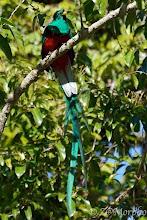 Photo: Resplendent Quetzal @ Savegre Lodge, San Gerardo de Dota