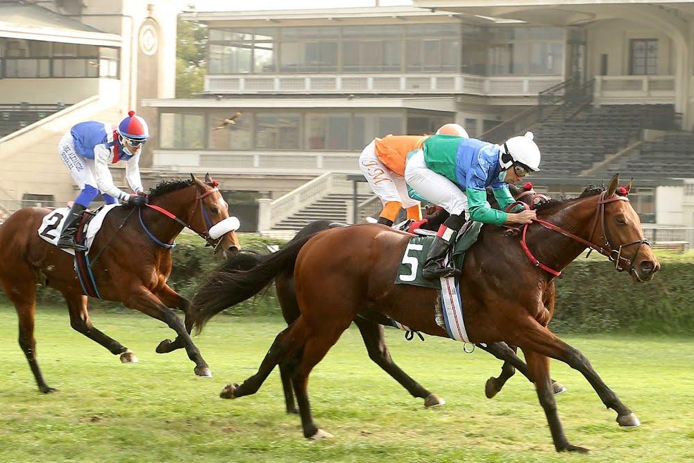 Royal Luck (Lookin At Lucky) se queda con el Clásico Alvaro Covarrubias P. (G3-1600m-Pasto-CHS).