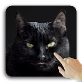 Black Real Kitty Cat Live Wallpaper Interactive 3D