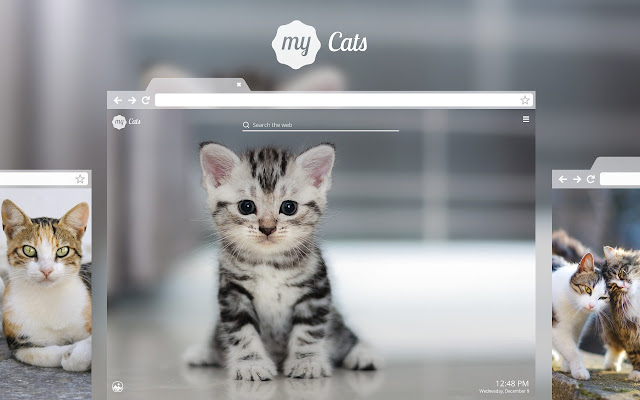 All You Need Is Love And A Cat Enjoy Overly Adorable Cat And Kitten Wallpapers With Every New Tab Cute