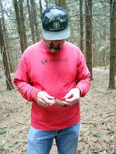 Photo: Pine cone discussion