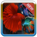 Betta Fish 3D icon