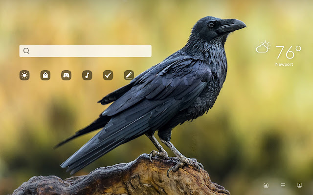 Raven HD Wallpapers New Tab
