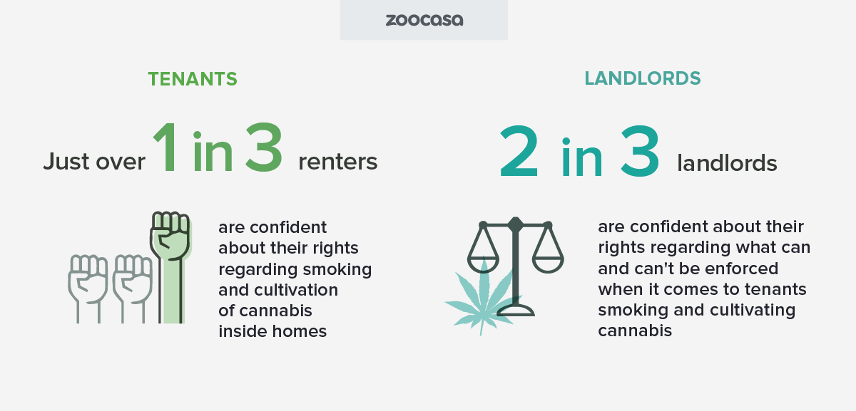 zoocasa-cannabis-tenants-landlords-rights