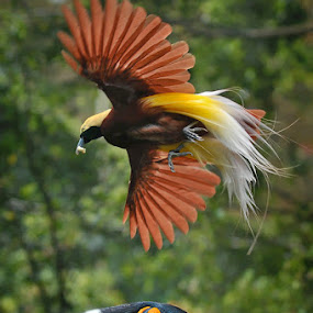 The Duel by Bimo Gupono - Animals Birds