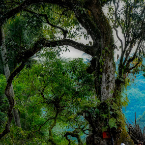Beautiful tree  by Agung Hendramawan - Landscapes Forests ( #trees, #nature, #landscape, #travel, #plant )