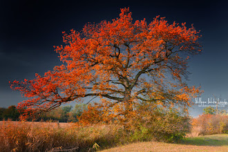 Photo: Hi Folks,  Autumn is characterized by sunny and marked by colors on the trees... I agree!  Take the opportunity to read the article: The Guide to autumn photo http://bit.ly/TaTqQd  Have a nice day and thanks for your support here on G+  #fallphotos  #trees  #autumnphotography  #naturephotography
