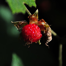 by Sambit Bandyopadhyay - Nature Up Close Gardens & Produce (  )
