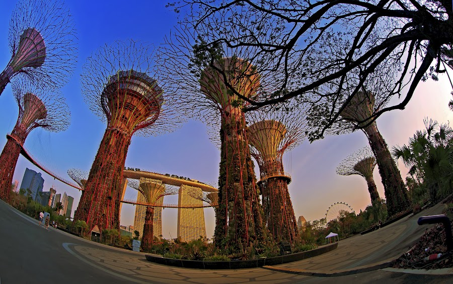 Gardens by the bay singapore by Surya  Iskandar - City,  Street & Park  City Parks ( park, city parck, gardens, gardens by the bay singapore, singapore )