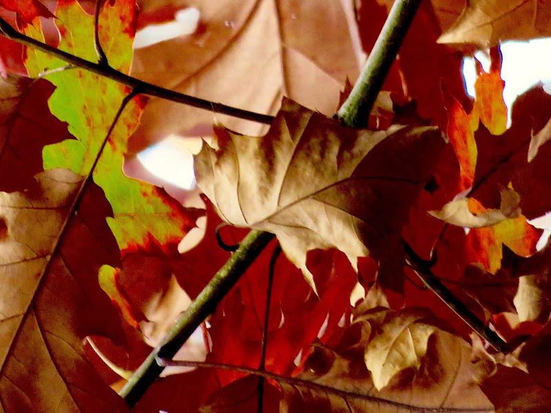 foglie multicolore di mariellaturlon