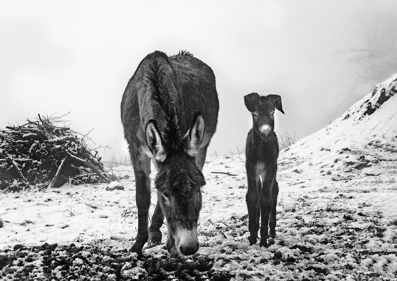 Donkeys in the fog di Moreno re