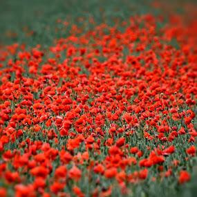 by Heather Aplin - Flowers Flowers in the Wild (  )