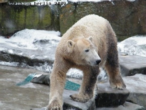 Photo: Nun ist auch Knut wach und unterwegs :-)