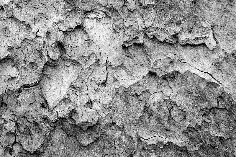 Photo: bark